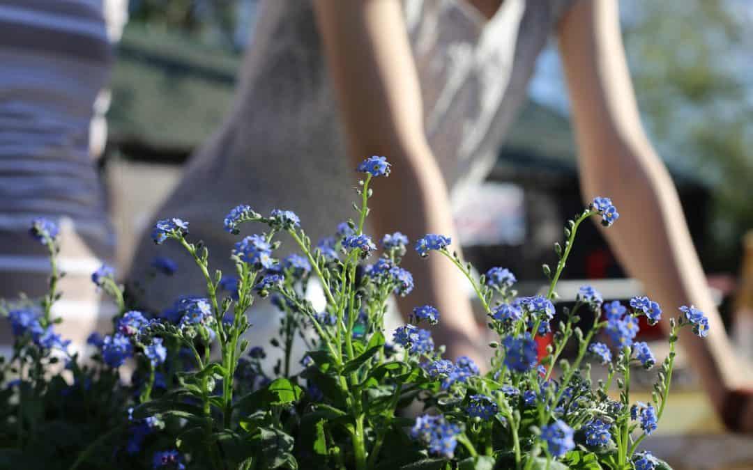 Jak zaaranżować i urządzić domowy ogród?