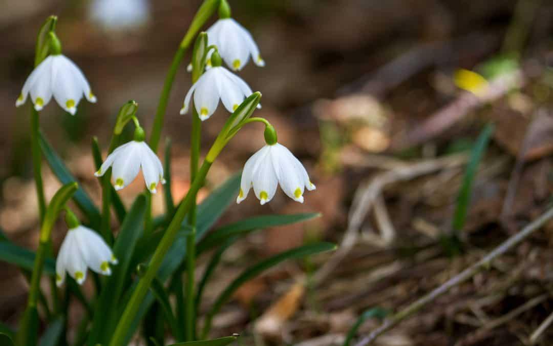 Wiosenne nawożenie roślin