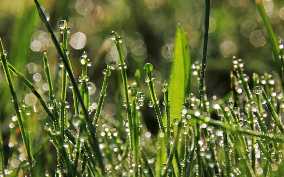 Pielęgnacja trawnika latem