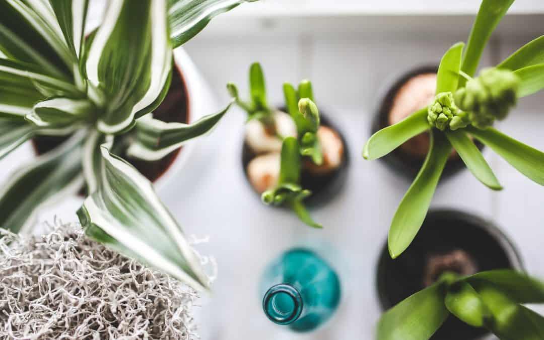 Zdrowe rośliny doniczkowe