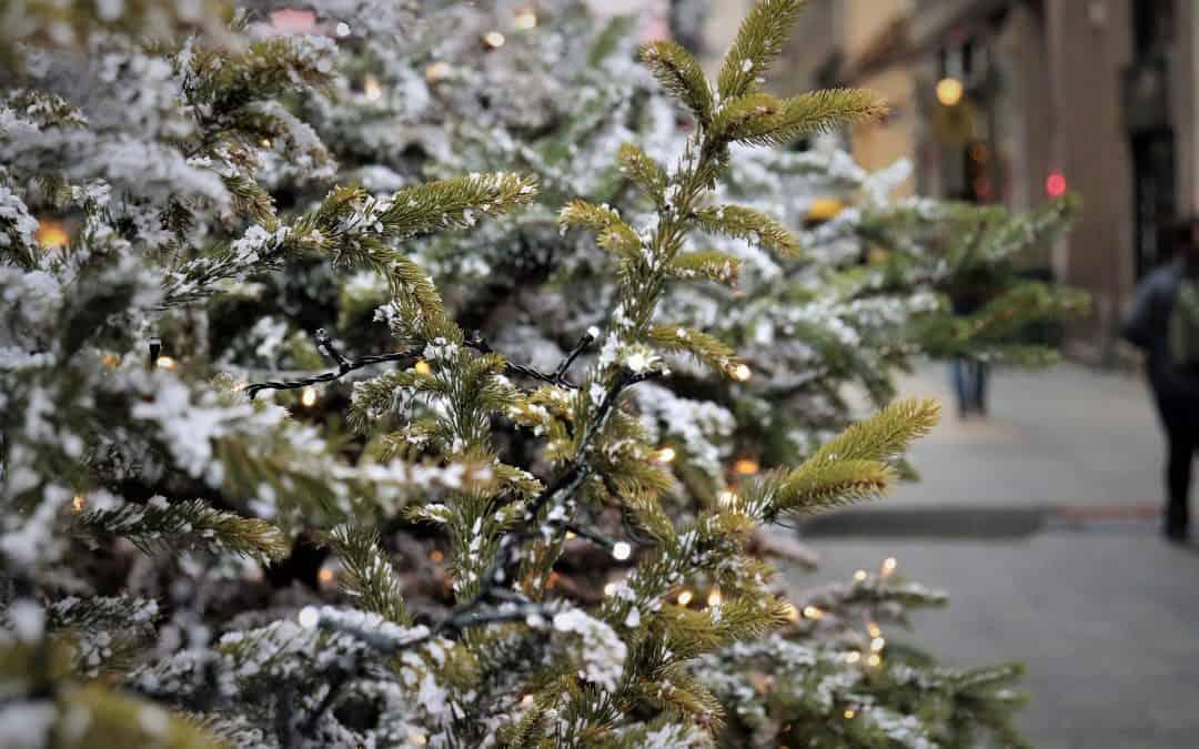 Jak wykorzystać choinkę po świętach?