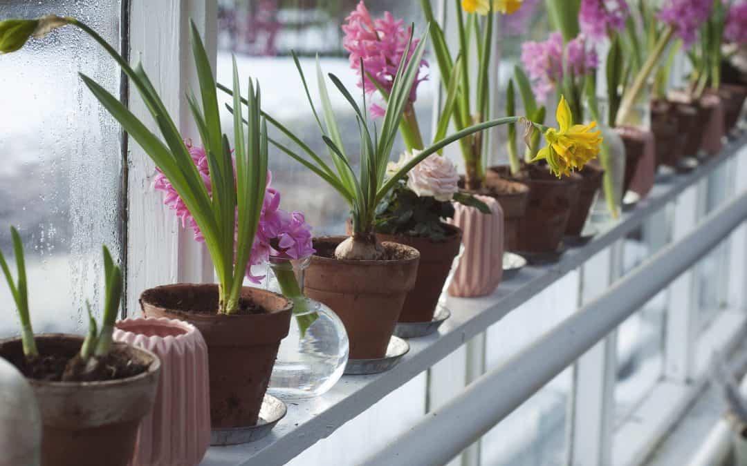 Jak dbać o kwiaty doniczkowe zimą?