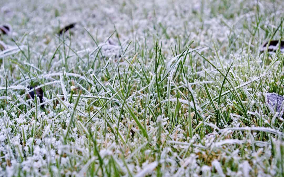 Jak zadbać o trawnik zimą?