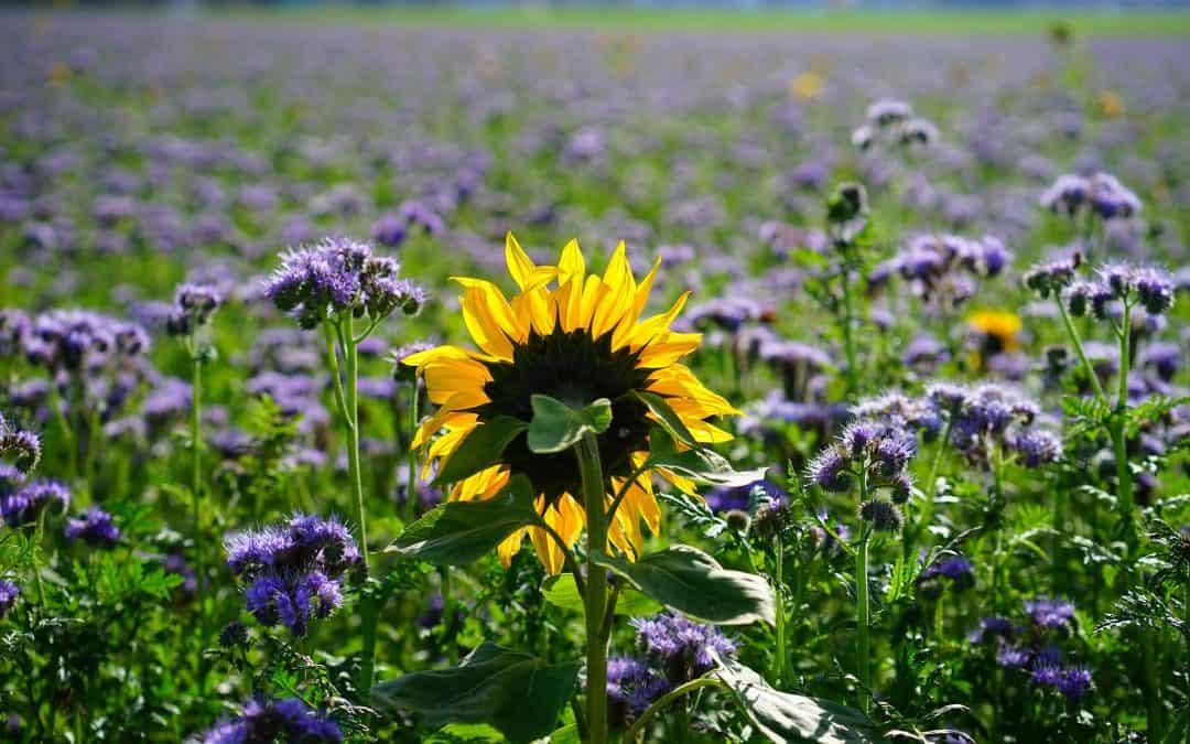 Wiosenne nawożenie ogrodu