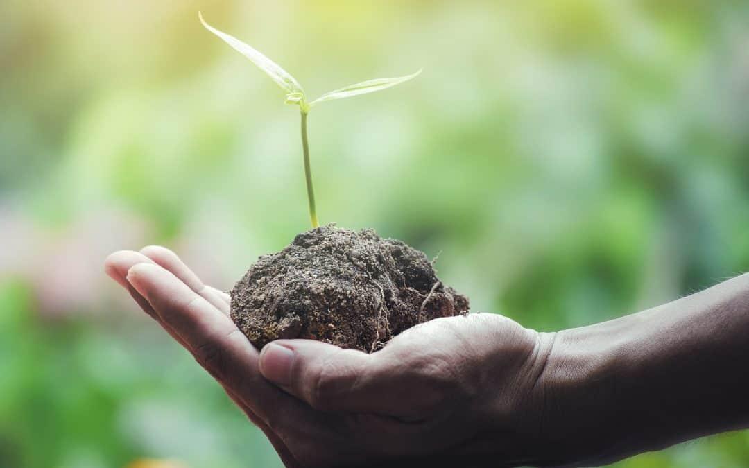 Najważniejsze zasady eko ogrodu