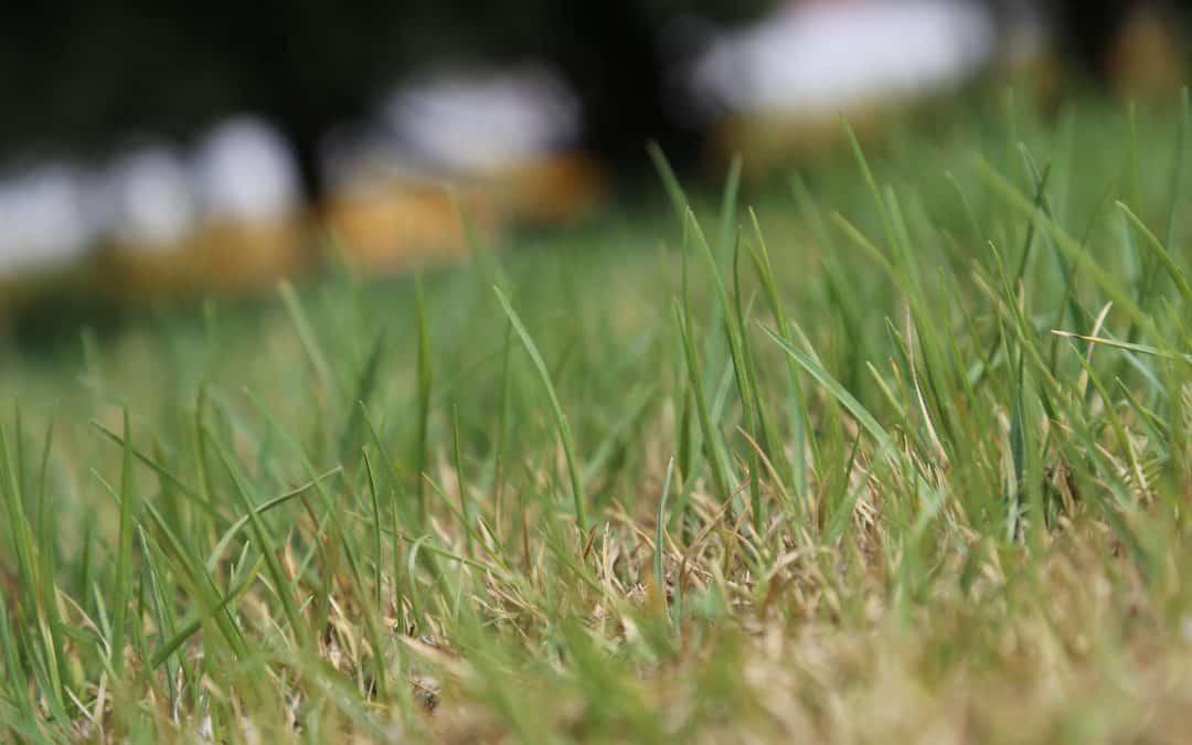 Najczęstsze choroby trawnika
