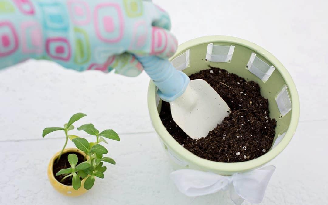Jak rozmnożyć rośliny doniczkowe?