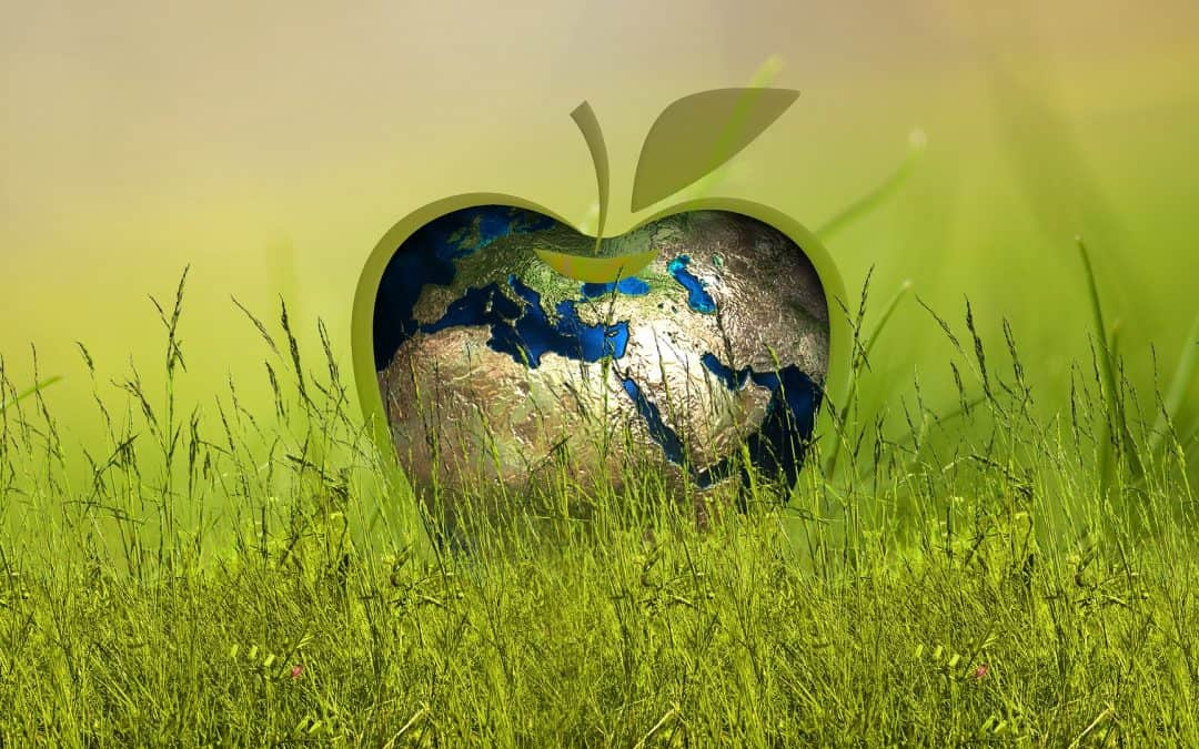 Ekologiczny ogród – czyli jaki?