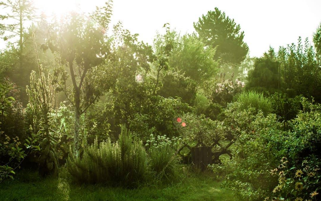 Ogród deszczowy – czym jest? Jak go założyć?