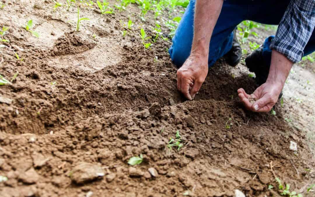 Jak dbać o glebę w naszym ogrodzie?