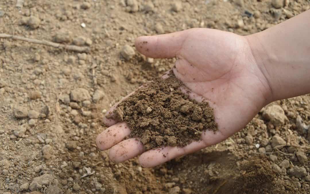 Sprawdź, jaki masz rodzaj gleby w ogrodzie