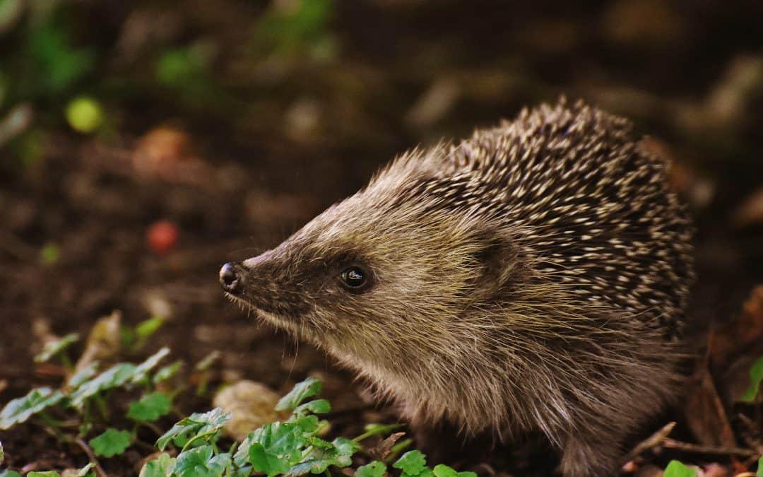 Ogród przyjazny zwierzętom i owadom – jak go stworzyć?