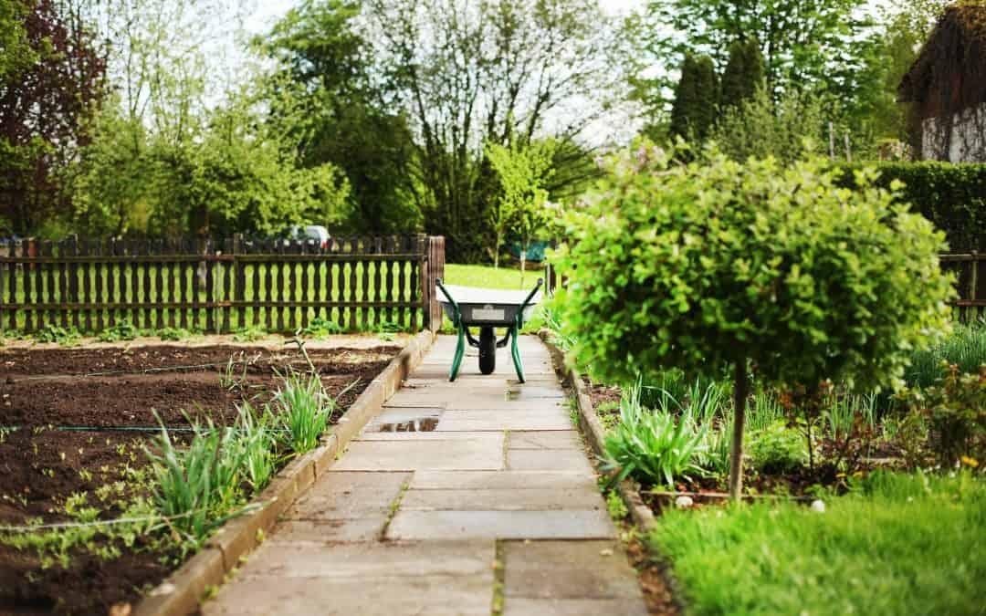 Wybór i pielęgnacja roślin w ogrodzie ekologicznym
