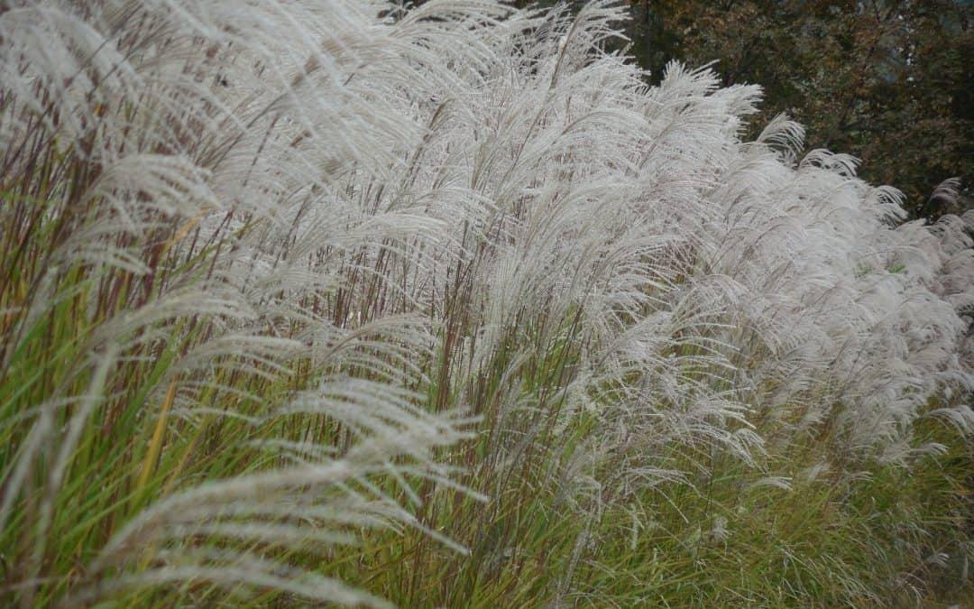 Jesień – czas ozdobnych traw