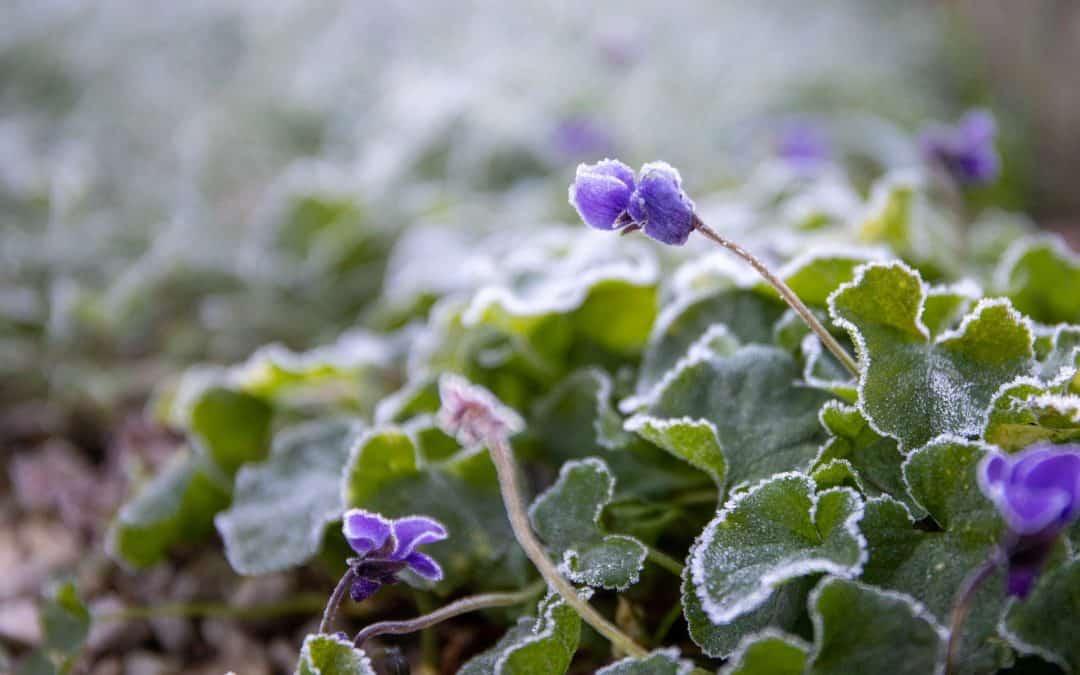 Ochrona rabat kwiatowych przed zimą