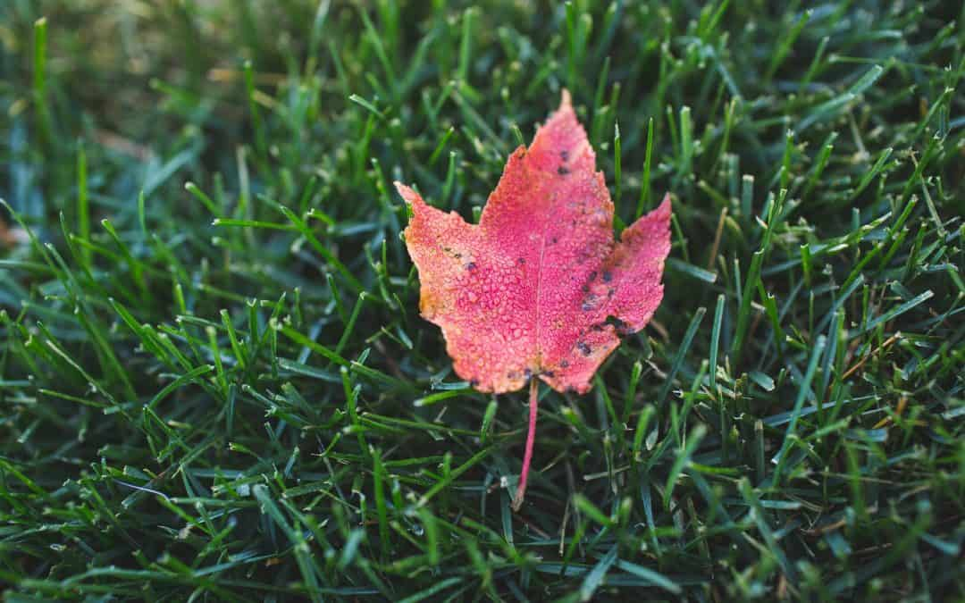 Jak zadbać o trawnik przed zimą?