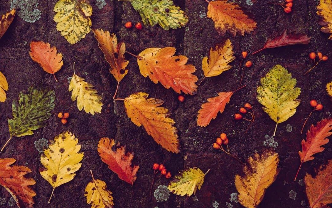 Ziemia liściowa – zbawienie dla gleby