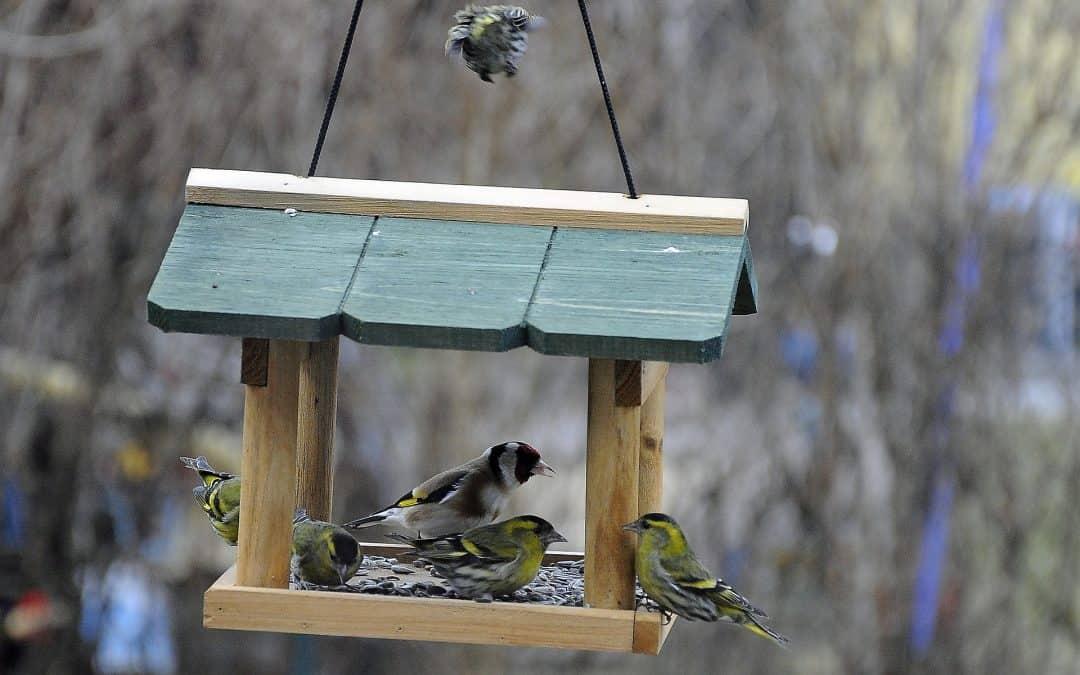 Jak zbudować karmnik dla ptaków i czym je dokarmiać?