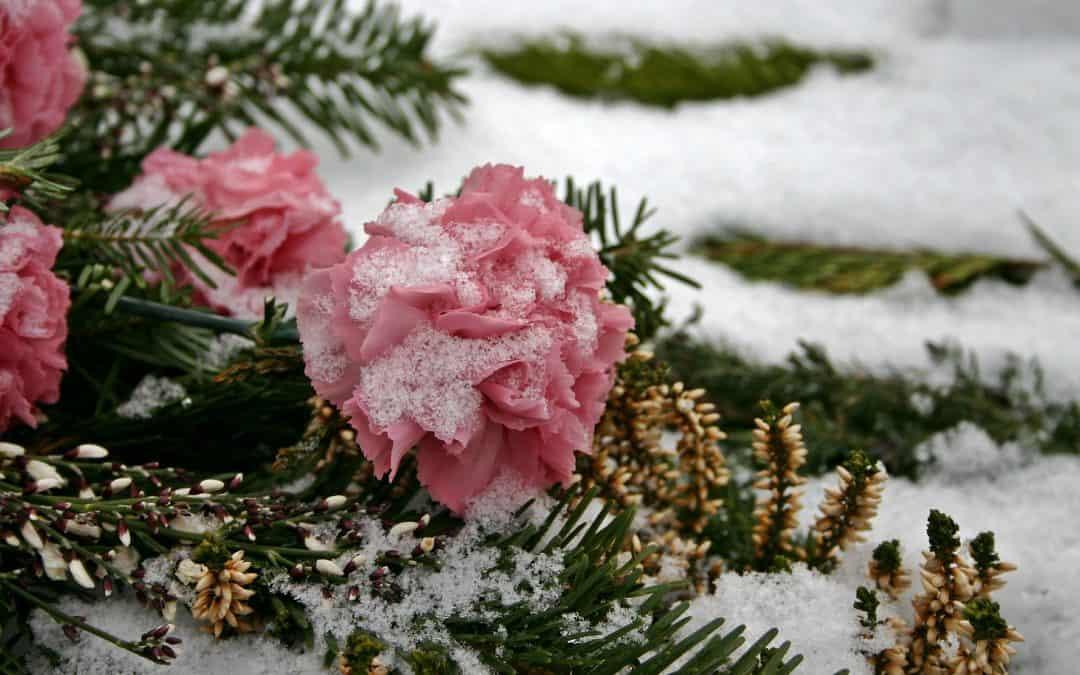 Jak zabezpieczyć rośliny na zimę?