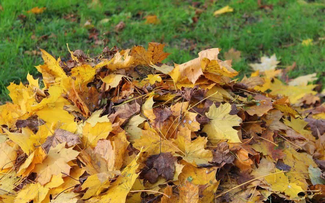 Wykorzystanie opadłych liści w ogrodzie