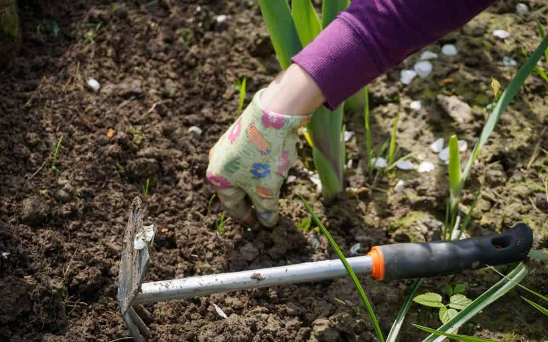 Pozimowa pielęgnacja ogrodu