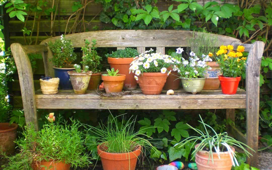 Domowy nawóz dla roślin
