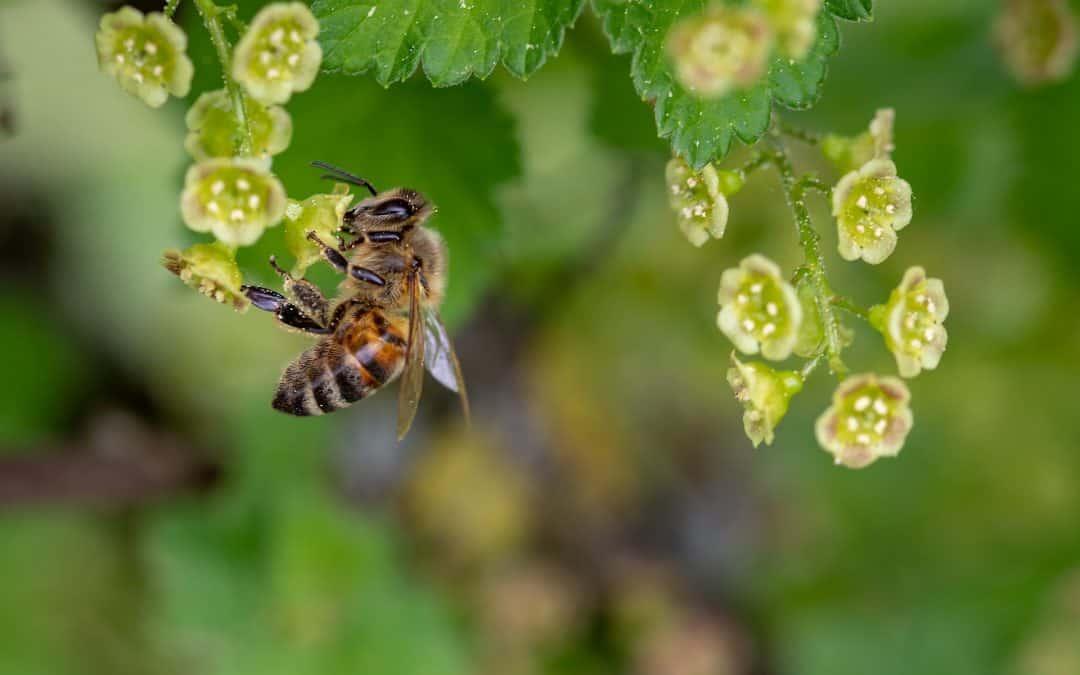Siej kwiaty i pomóż pszczołom