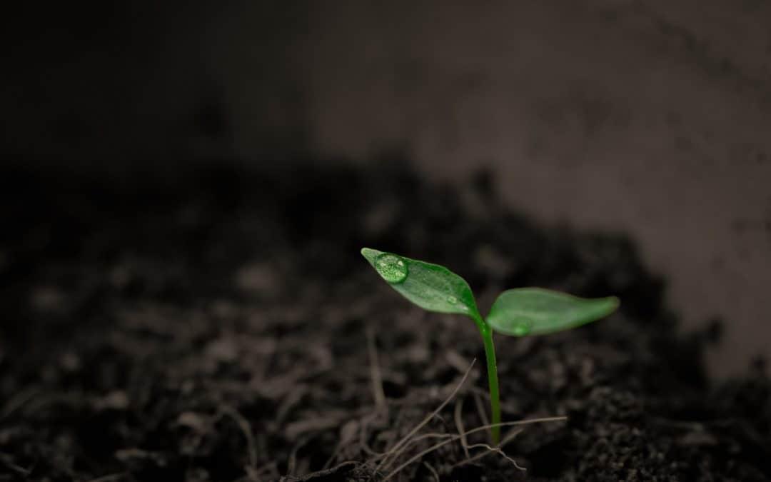 Jak zbadać odczyn gleby?