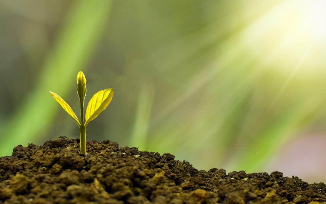 Rola makroelementów w uprawie roślin