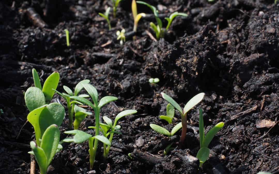 Jak poprawić właściwości gleby?