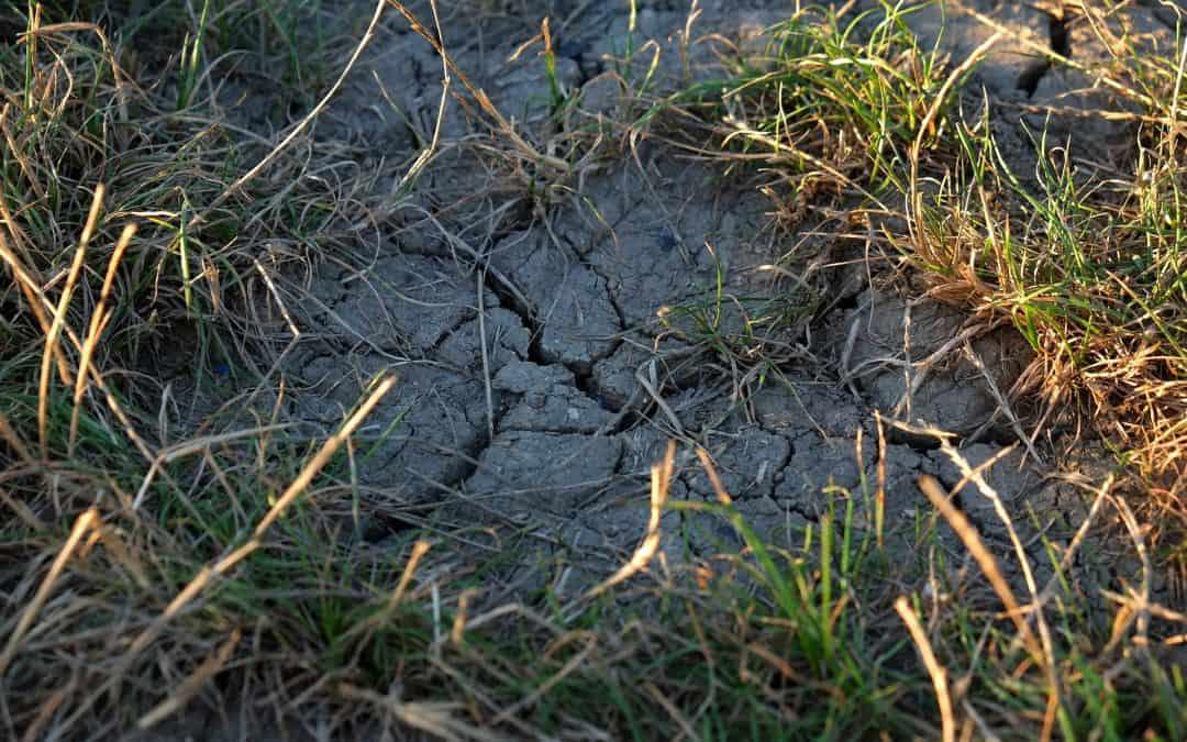 Szkodniki glebowe – naturalne sposoby na ich zwalczenie