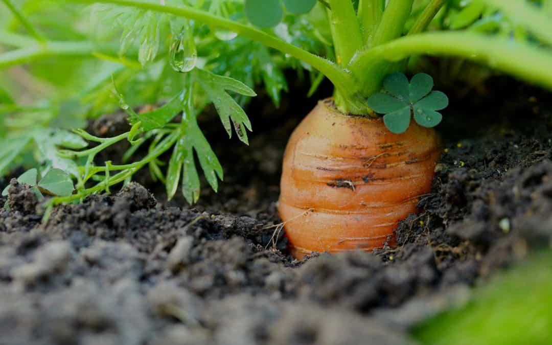 Zapobieganie występowania szkodników w uprawie warzyw