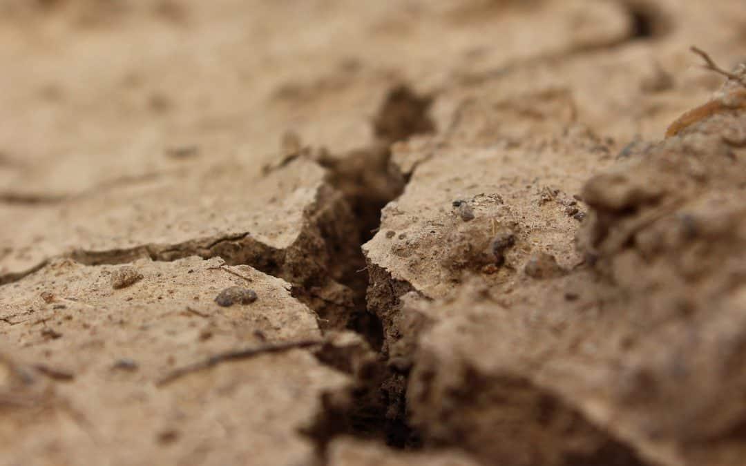 Jak sprawdzić stan gleby w ogrodzie?