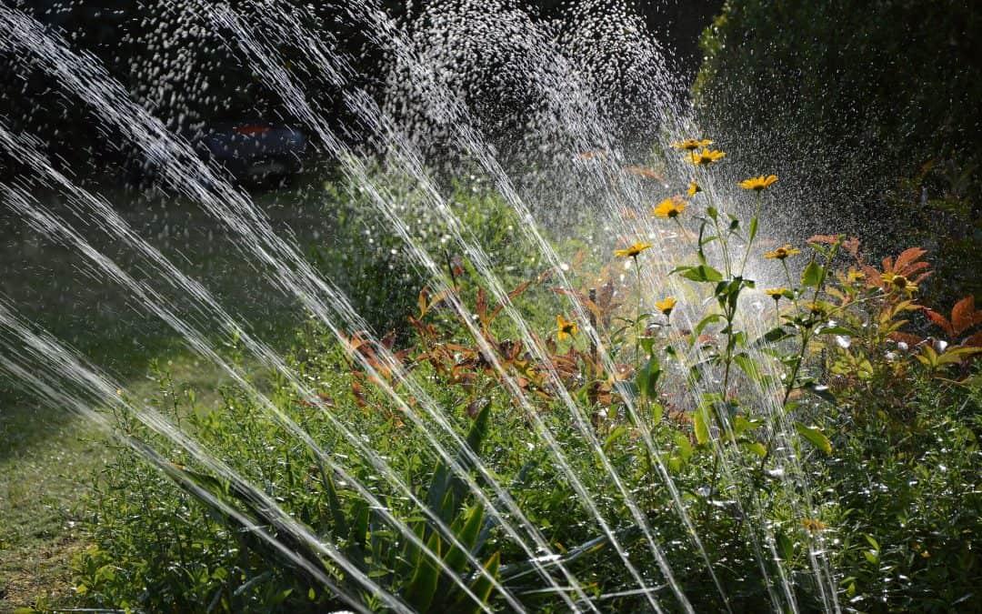 Jak zadbać o ogród w upały?