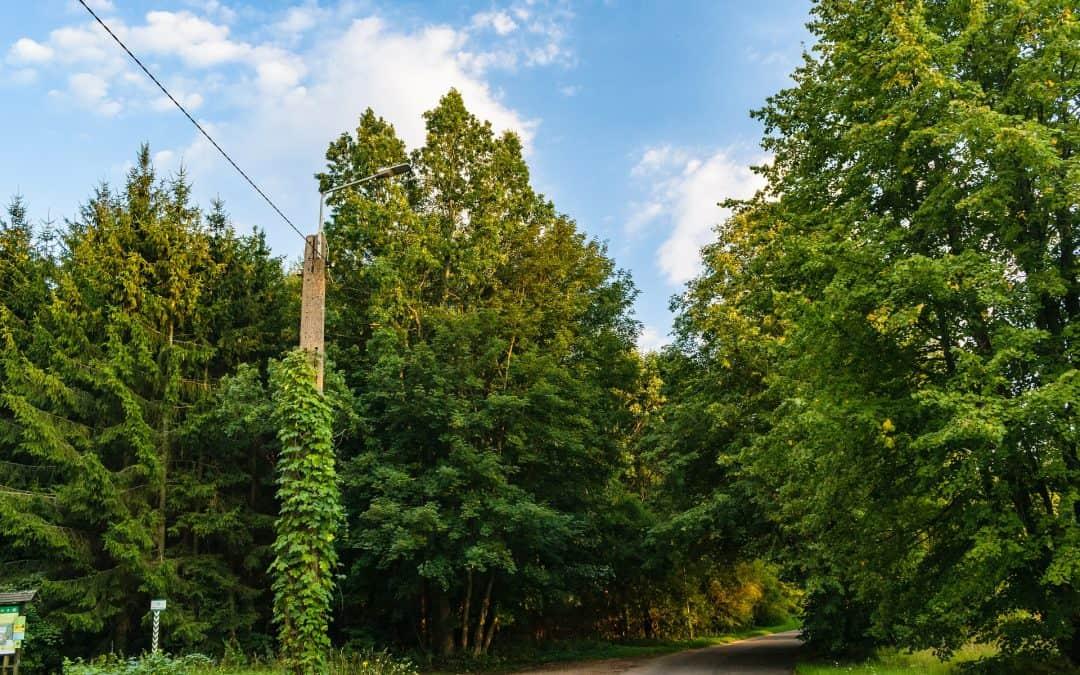 Oczyszczanie powietrza przez rośliny ogrodowe